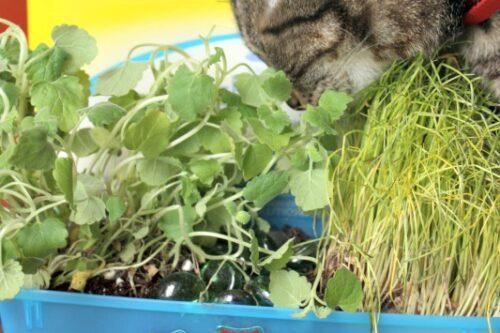 diy indoor cat garden