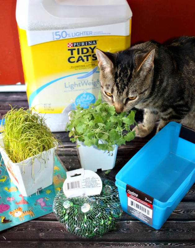 How to make an indoor cat garden mypetmystar love for Indoor gardening with cats