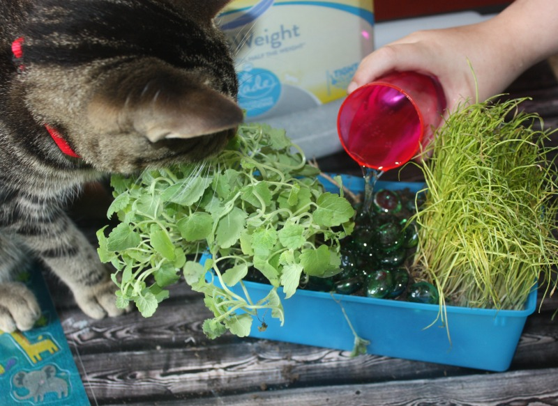 indoor cat garden how to
